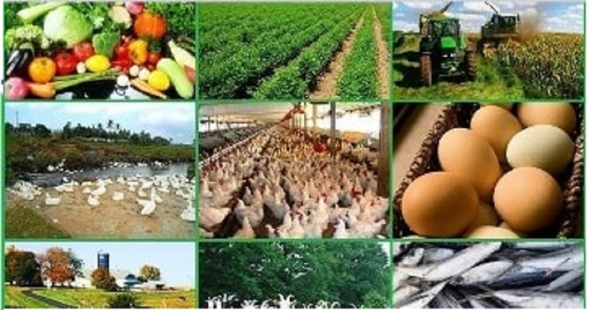 Top-and-Best-Small-Agricultural-Business-Ideas-with-Low-Investment
