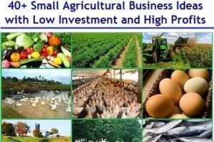 40+ Small Agricultural Business Ideas with Low Investment