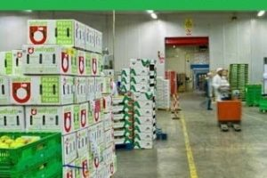 Profitable Wholesale Business Ideas in India