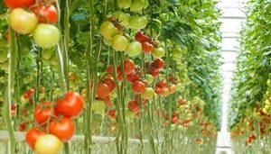 Most Successful Business Ideas to start in 2021 - Hydroponics